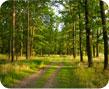 kasvava metsa raieõiguse osk, metsamaa ost