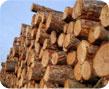 kasvava metsa raieõiguse ost, metsamaa ost, metsa ost
